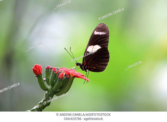 Butterflies. Tambopata rainforest. Amazonia basin. Peru