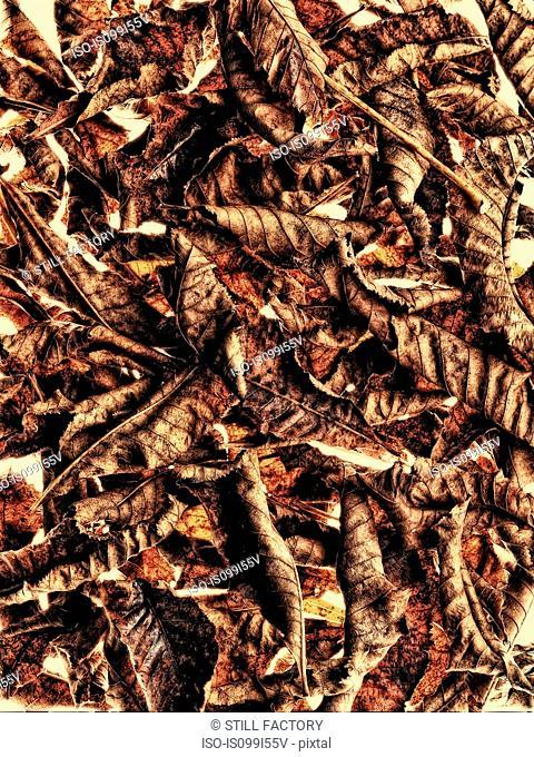 Pile of chestnut leaves