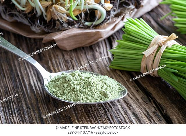 Barley grass powder on a spoon, with freshly harvested blades in the background