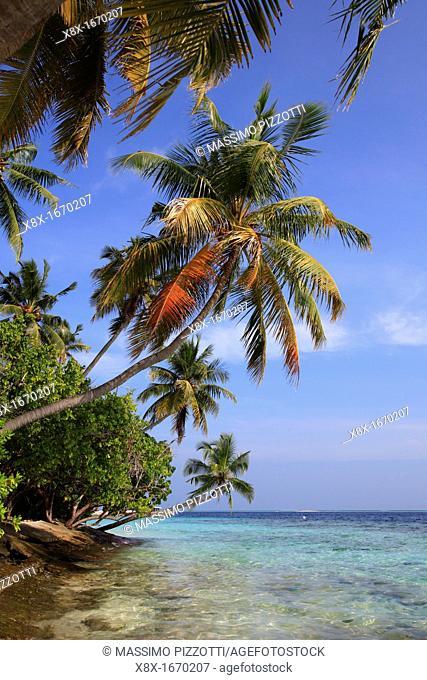 Palm trees on the seashore, Biyadhoo island, Maldives