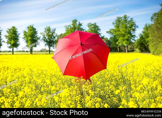 Woman with red umbrella standing amidst oilseed rapes against sky