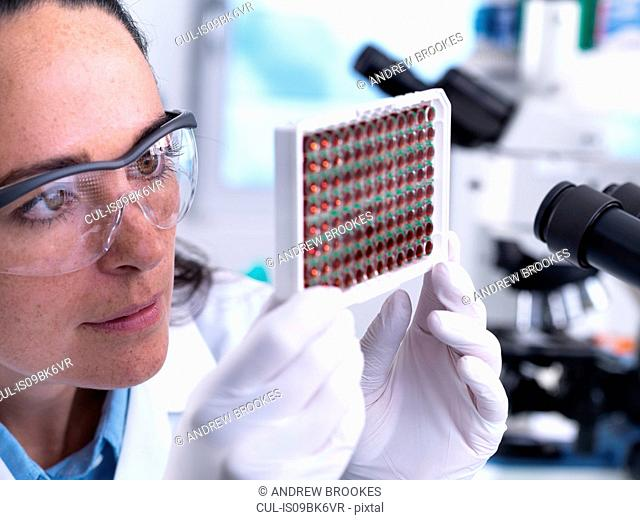 Scientist viewing a multi well plate containing blood samples for screening a laboratory