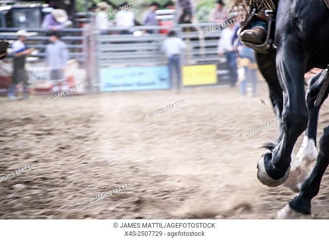 Close up of a horse, a rider and flying dust at a Montana rodeo