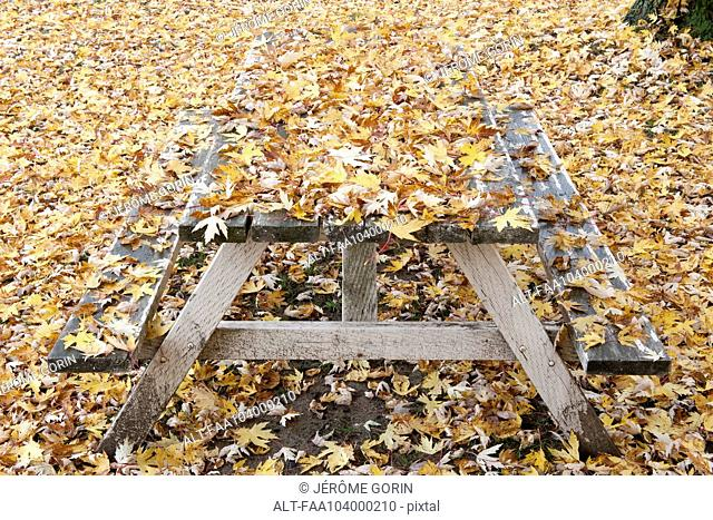 Picnic table covered in autumn leaves