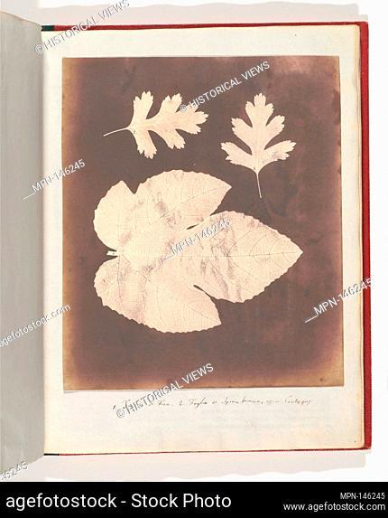 1. Foglia di Fico. 2. Foglia di Spino bianco, ossia Crataegus. Artist: William Henry Fox Talbot (British, Dorset 1800-1877 Lacock); Date: 1839-40; Medium:...