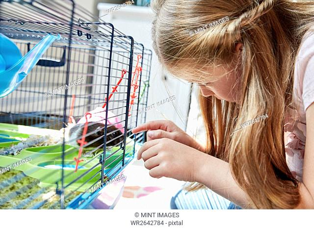 A girl looking into a pet cage at her small brown hamster
