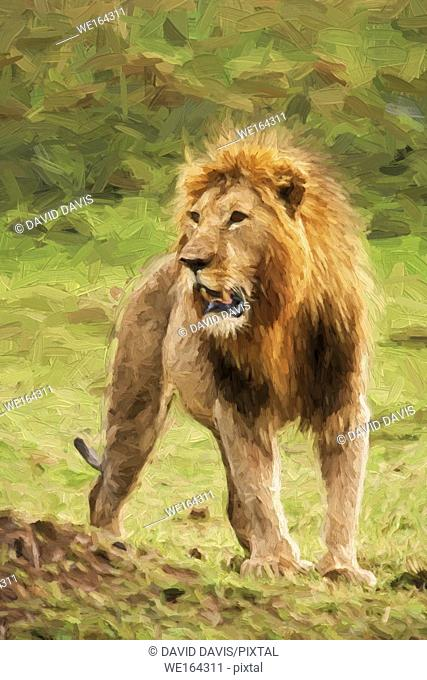 Impressionist art of a proud Male Lion Panthera leo from the Masia Mara in Kenya, Africa