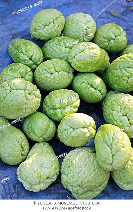 Sechium edule, Cucurbitaceae, Chayote, Vegetable Pear, Choko, Chow Chow