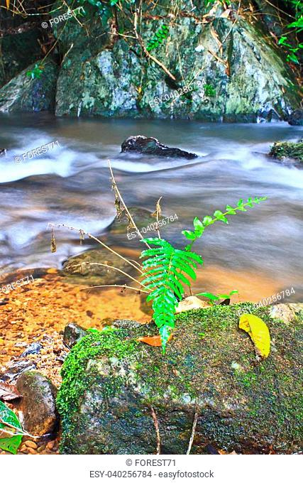 Tree and moss on stone in stream. Fresh spring air in the evening after rainy day, deep green color of fern and moss