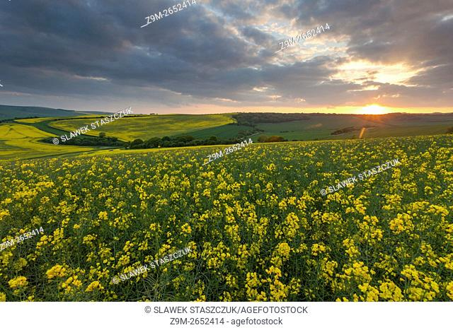 Spring sunset on the South Downs near Brighton, East Sussex, England