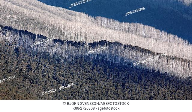 Mountainous landscape with trees killed by bushfires in the Alpine National Park, Victoria, Australia