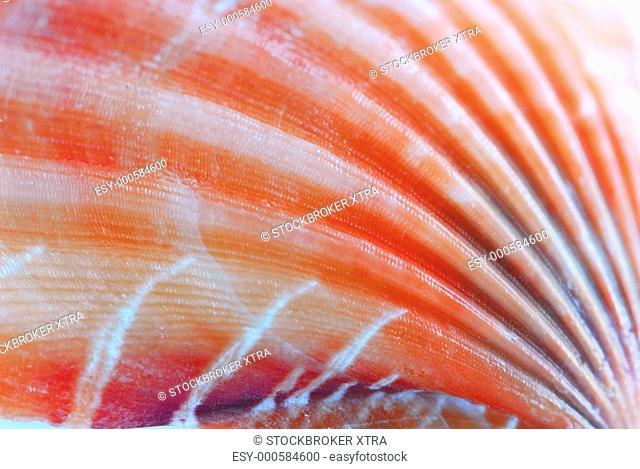 Background of a seashell surface extreme macro image