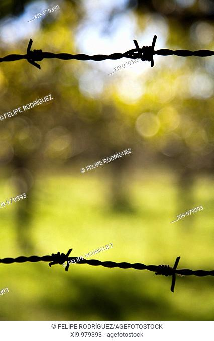 Barbed wire, town of Castaño del Robledo, province of Huelva, Andalusia, Spain