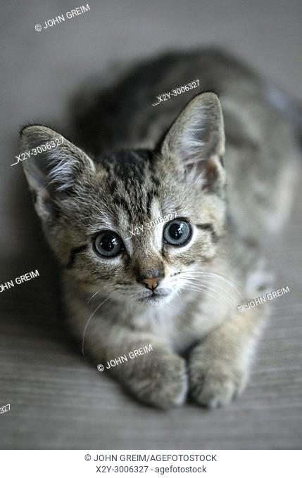 Adorable tabby kitten portrait