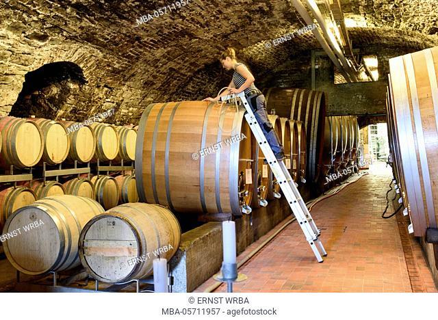 Wine cellar in the state vineyard Meersburg, Meersburg, Lake of Constance, Baden-Wurttemberg, Germany
