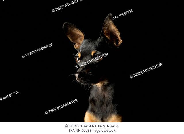 Prager Rattler Portrait
