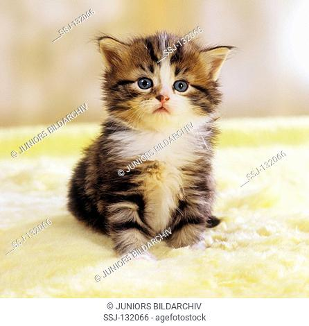 kitten - sitting restrictions:Tierratgeber-Bücher / animal guidebooks, puzzles worldwide, mobile phone content worldwide