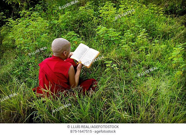 monja, monasterio budista tibetano, mungod, karnataka, India  campamento de refugiados tibetanos, comunidad religiosa, cultura, estudio, exterior, dia, campo
