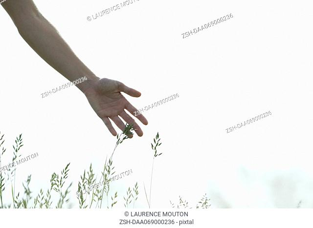Young woman's hand touching tall grass