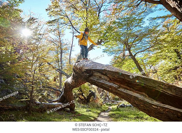 Argentina, Patagonia, El Chalten, boy balancing on a tree trunk in forest