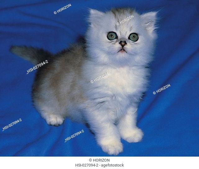 Pets, cat, kitten, Close-up