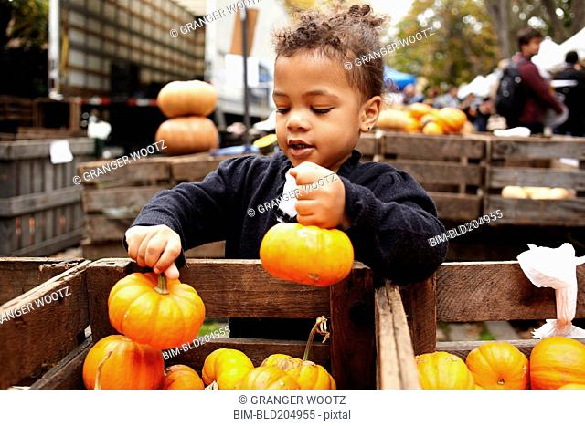Mixed race girl picking pumpkins at market