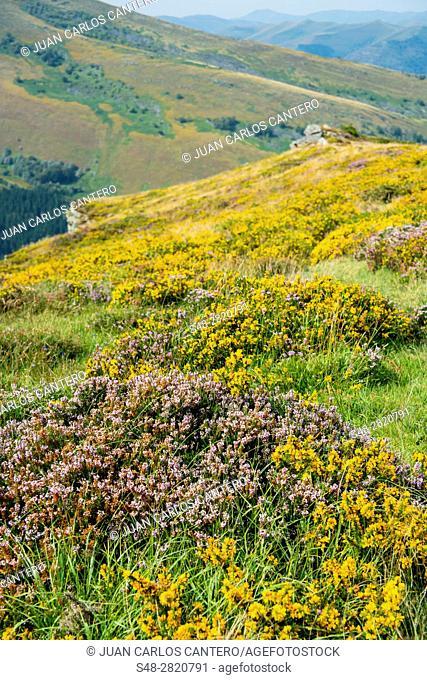 Parque natural, Saja-Nansa. Cantabria. España. Europa