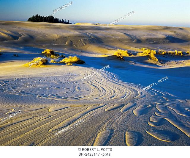 Frost turns the sand white in the winter; Lakeside, Oregon, United States of America