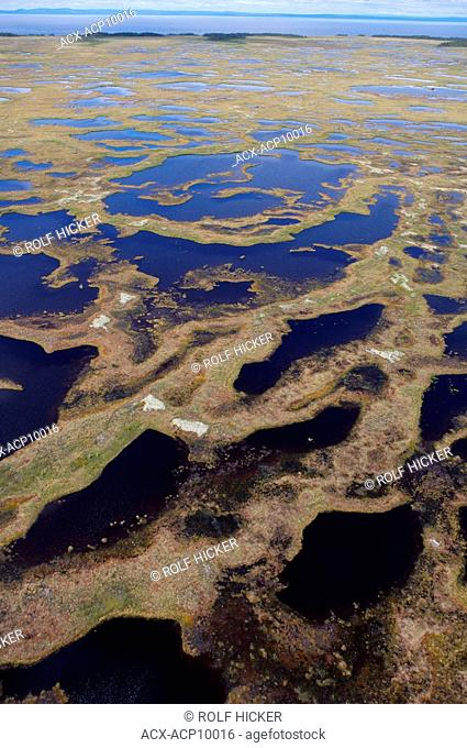 Aerial view of the marshland bogs in the wilderness of Southern Labrador, Newfoundland & Labrador, Canada