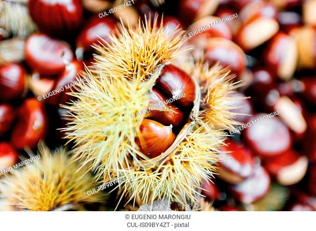 Chestnuts, some in prickly casing