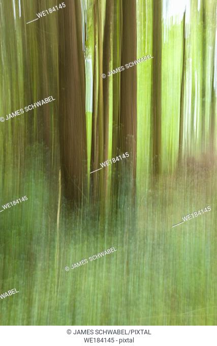 Abstract of blurred trees in green forest