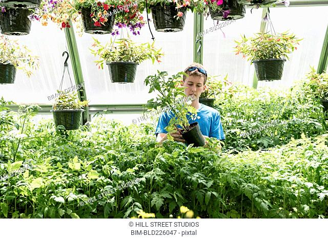 Man examining potted plant in greenhouse
