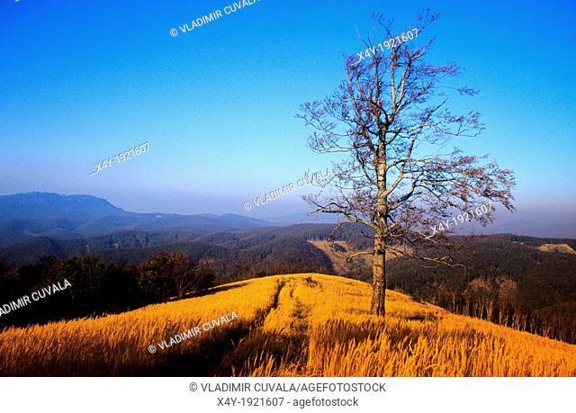 Solitary tree on the summit of Skalnata, Male Karpaty, Slovakia