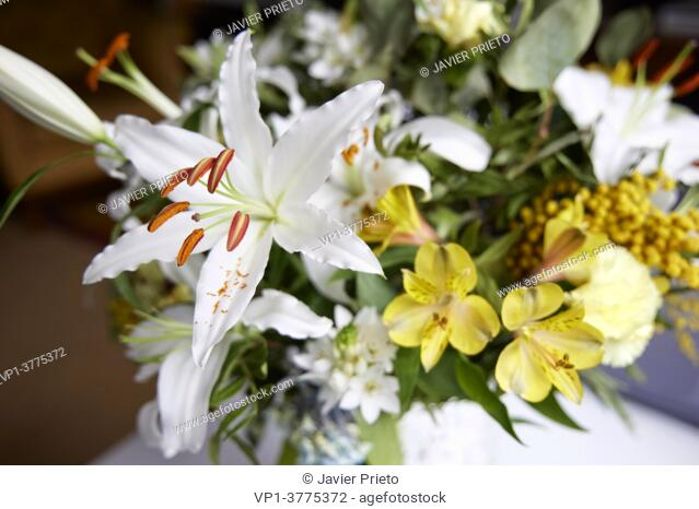 White Lilium. Composition of flowers in a vase