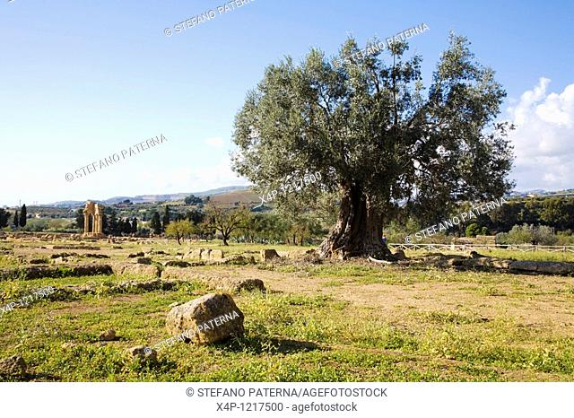 The historic Valley of temples near Agrigent, Sicily, Italy