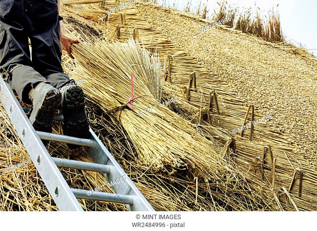 Man thatching a roof, standing on a ladder, yelms of straw
