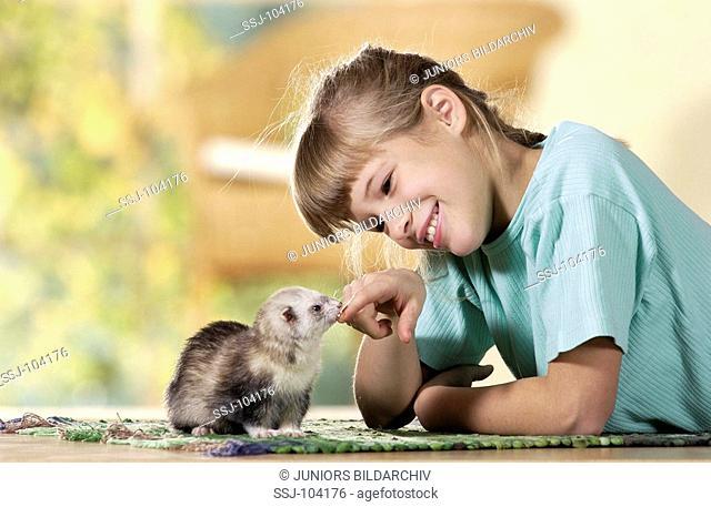 girl playing with domestic polecat / Mustela putorius f  furo
