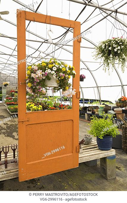 Suspended orange painted wooden door frame and hanging baskets with mixed flowers in steel framed commercial greenhouse in late spring, Quebec, Canada