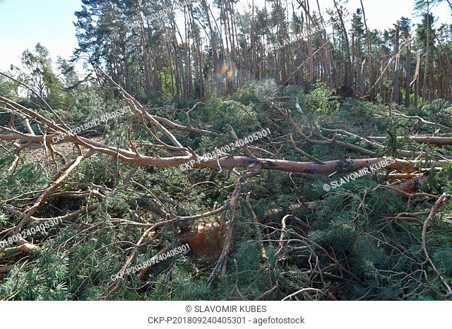 Broken and fallen trees in a forest after a strong wind near Lisany, Central Bohemian Region, Czech Republic, on September 24, 2018