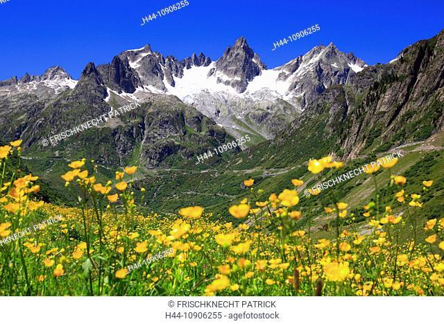 Alps, mountain, mountain panorama, mountains, mountain flora, mountain spring, mountain panorama, flower meadow, flora, spring, Fünffingerstöck, mountains