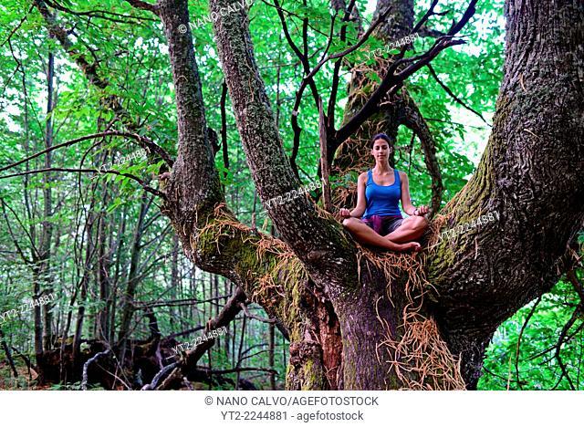 Young woman meditates on big chestnut tree