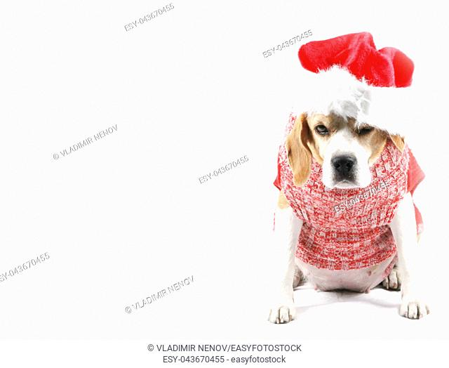 Cute Christmas puppy dog