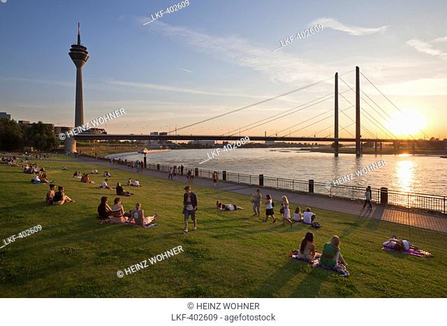 People sitting in the meadow at the Rhine river promenade at sunset, Duesseldorf, North Rhine-Westphalia, Germany, Europe
