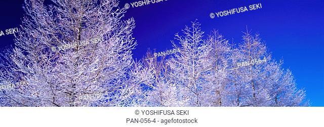 Frost on Trees, Utsukushigahara Plateau, Nagano, Japan