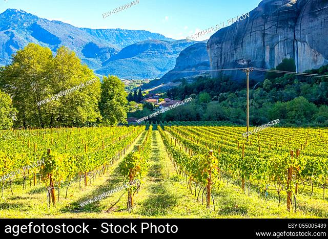 Greece. Sunny summer day in the rocks of Kalambaka. Vineyard belonging to the rock monastery of Meteora