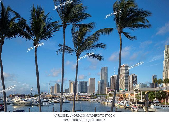 Tall Palm Trees Bayside Marketplace Marina Downtown Skyline Miami Florida Usa