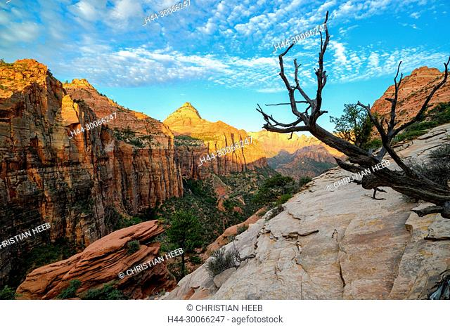 North America, American, USA, Southwest, Colorado Plateau, Utah, Zion, National Park, Canyon View