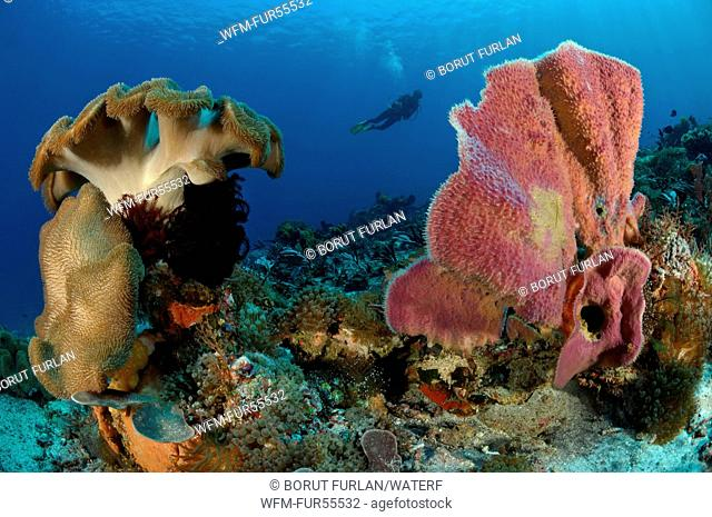 Indopacific Coral Reef, Alor, Indonesia