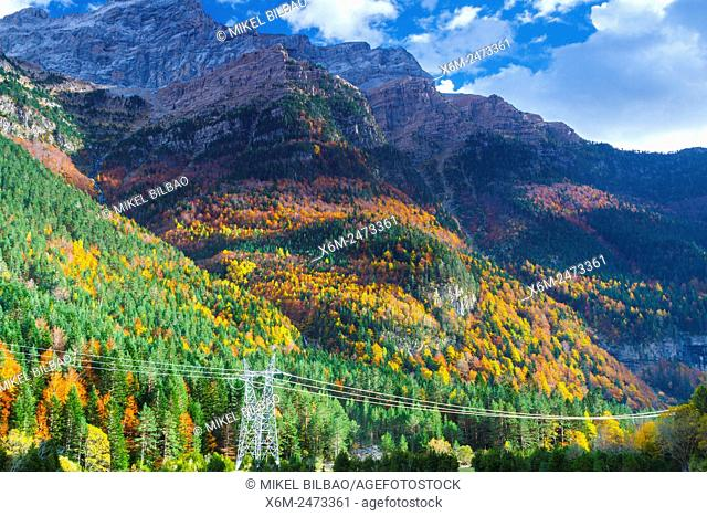 Forest and mountain. Bujaruelo Valley. . Pyrenees, Huesca, Spain, Europe