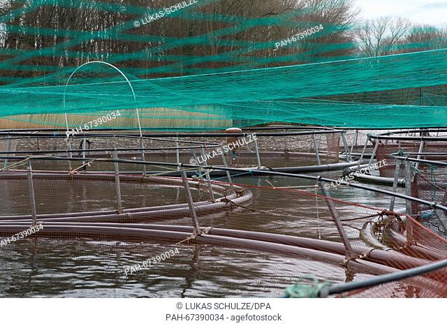 A trout breeding facility in Rade, Germany, 08 April 2016. Photo:LUKASSCHULZE/dpa | usage worldwide. - Rade/Schleswig-Holstein/Germany